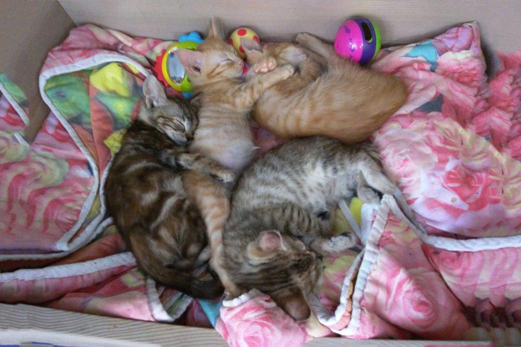 Adozione Precoce Associazione Animalista Le Fusa Onlus